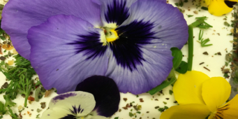 Flowering Down Under