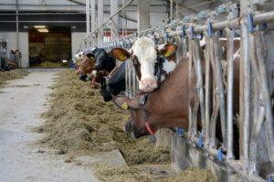 lehmä karja navetta maitotila neuvo 2020 ProAgria